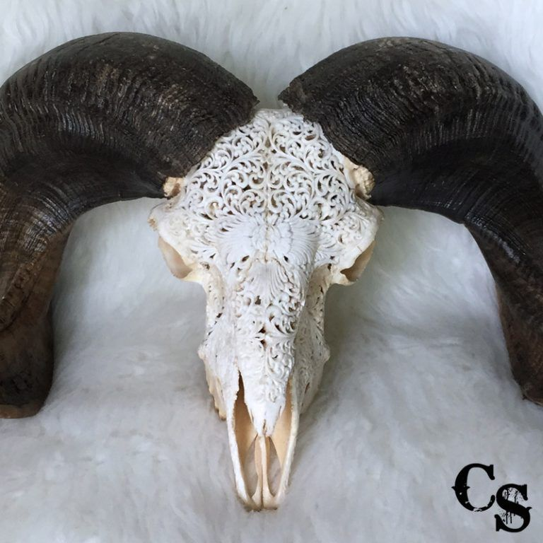 ram skull Carved Ram Skull with Flower Heart Design – White r1d 768x768
